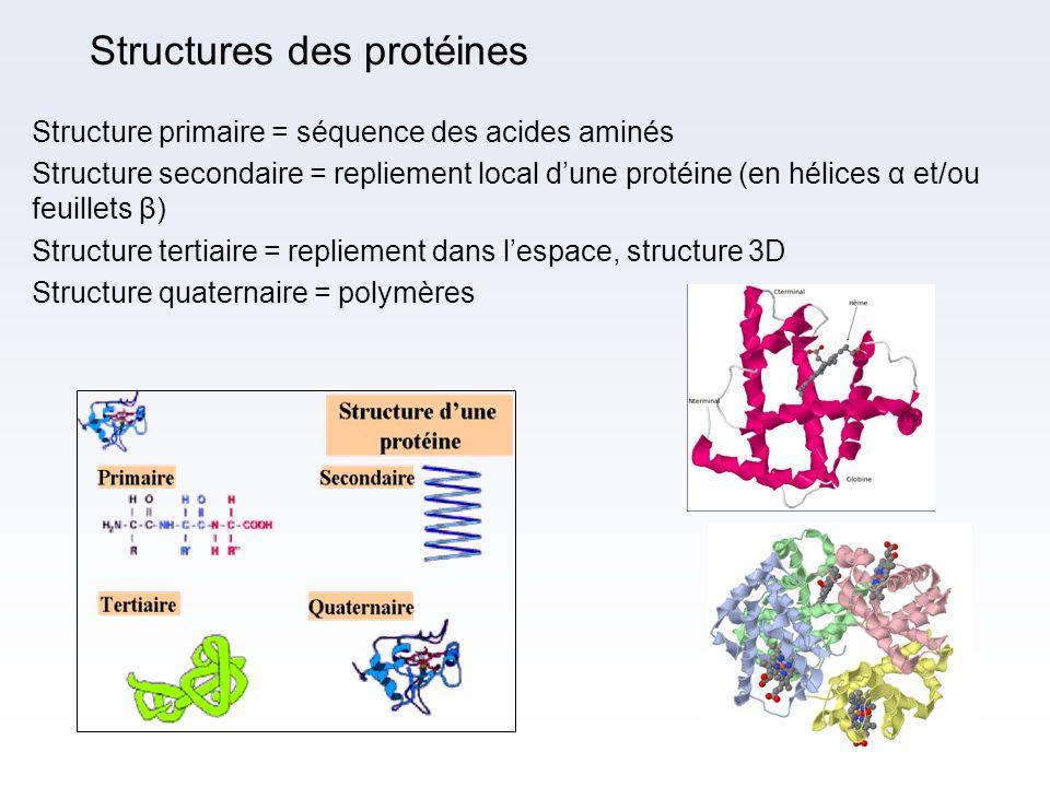 Structures des protéines