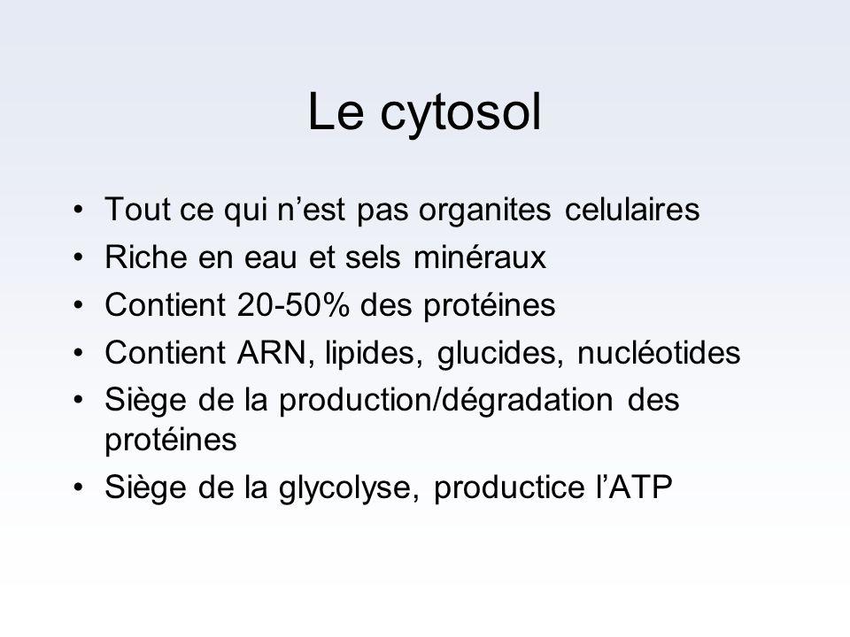 Le cytosol Tout ce qui n'est pas organites celulaires