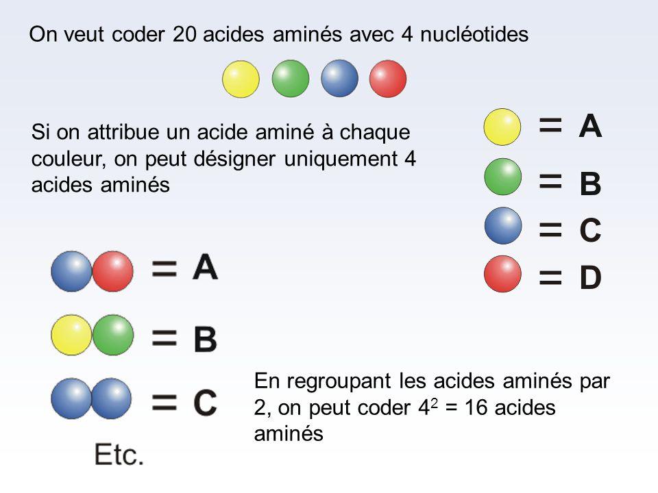 On veut coder 20 acides aminés avec 4 nucléotides