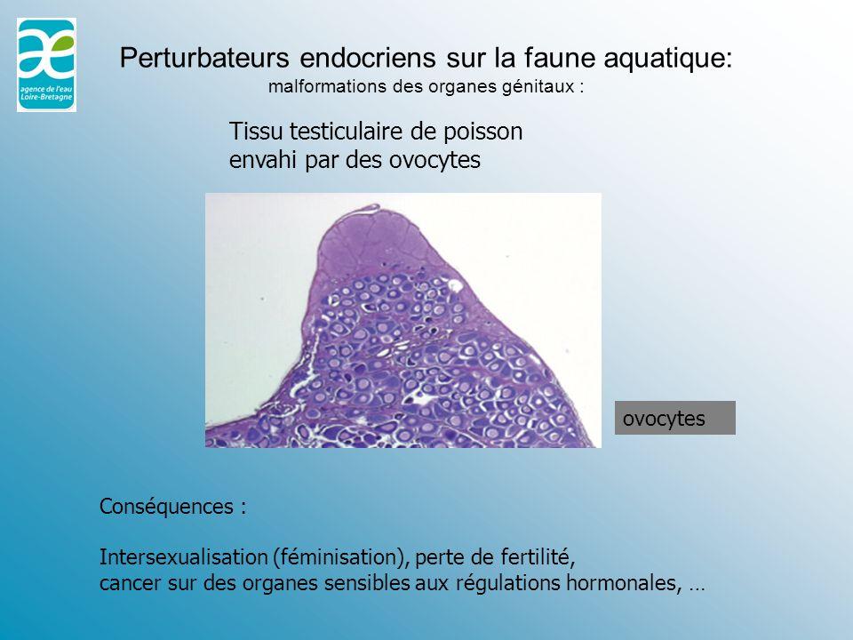 Perturbateurs endocriens sur la faune aquatique: malformations des organes génitaux :
