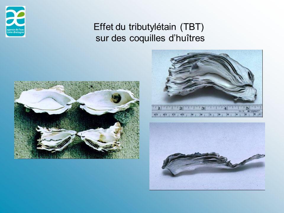 Effet du tributylétain (TBT) sur des coquilles d'huîtres
