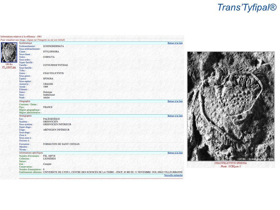 Trans'Tyfipal®