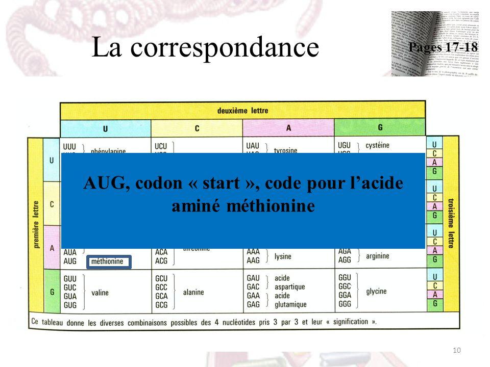 AUG, codon « start », code pour l'acide aminé méthionine