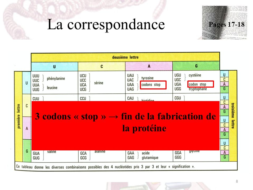 3 codons « stop » → fin de la fabrication de la protéine