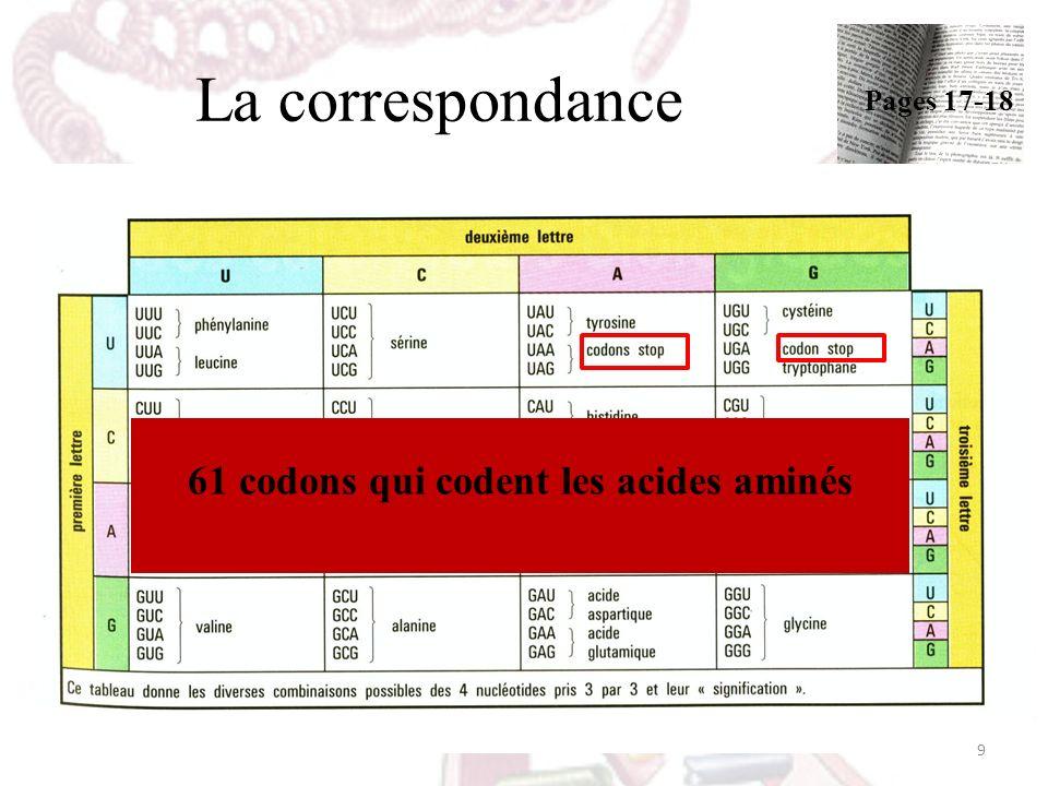 61 codons qui codent les acides aminés