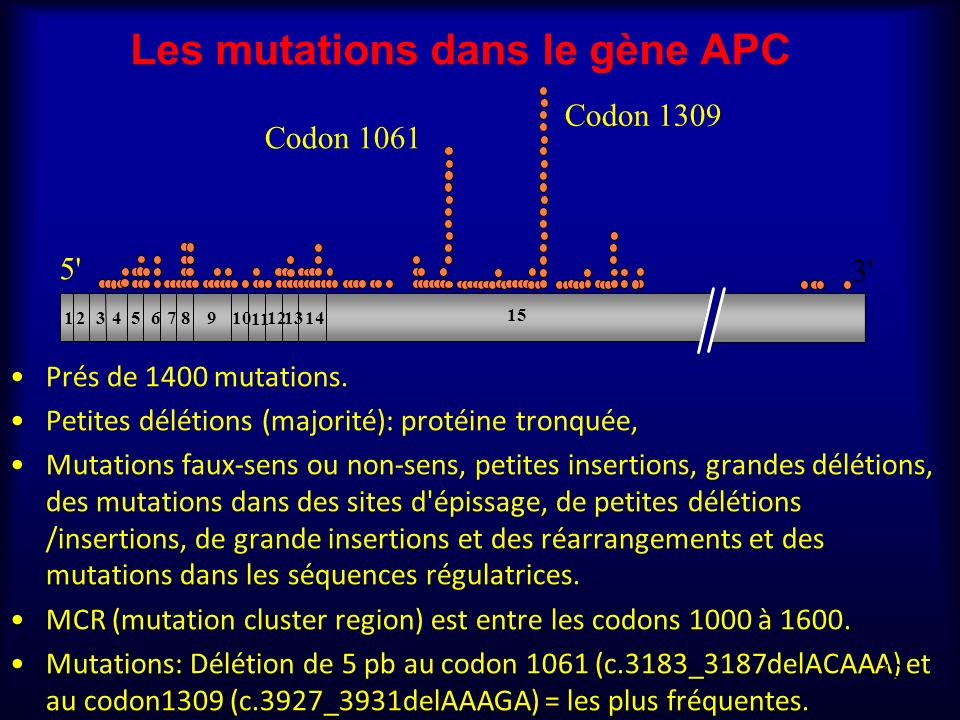 Les mutations dans le gène APC