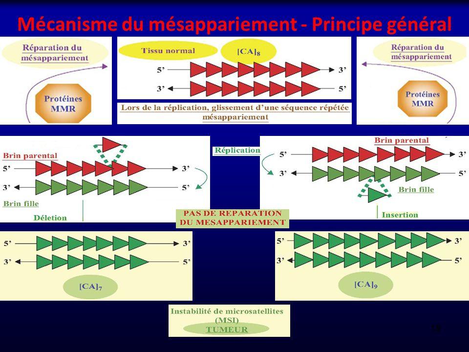 Mécanisme du mésappariement - Principe général