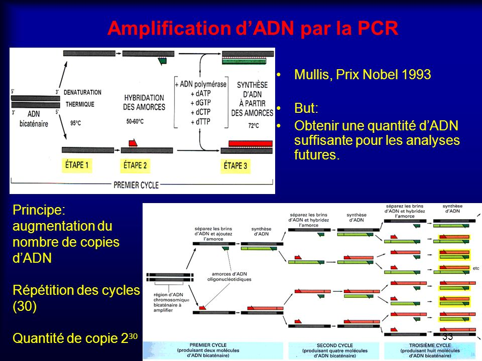Amplification d'ADN par la PCR