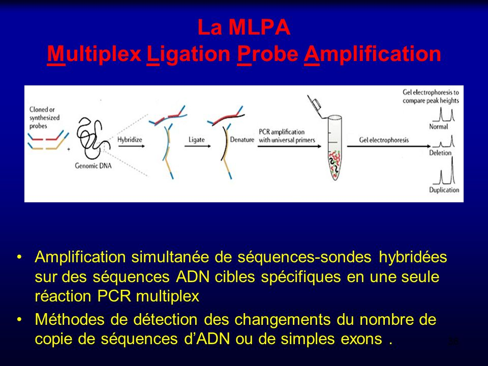 La MLPA Multiplex Ligation Probe Amplification