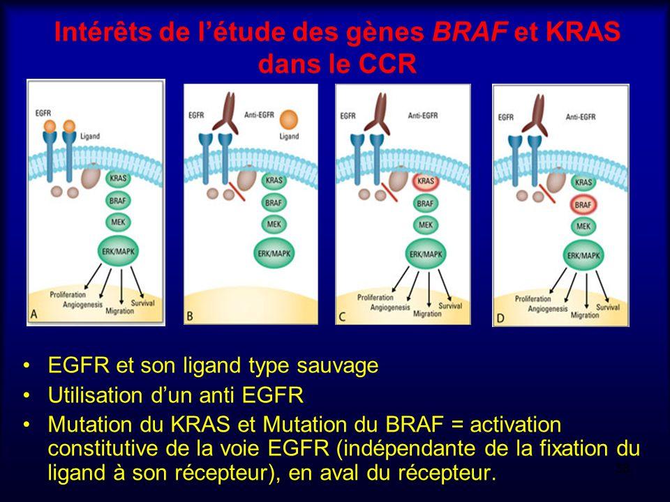 Intérêts de l'étude des gènes BRAF et KRAS dans le CCR