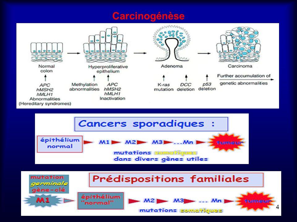 Carcinogénèse
