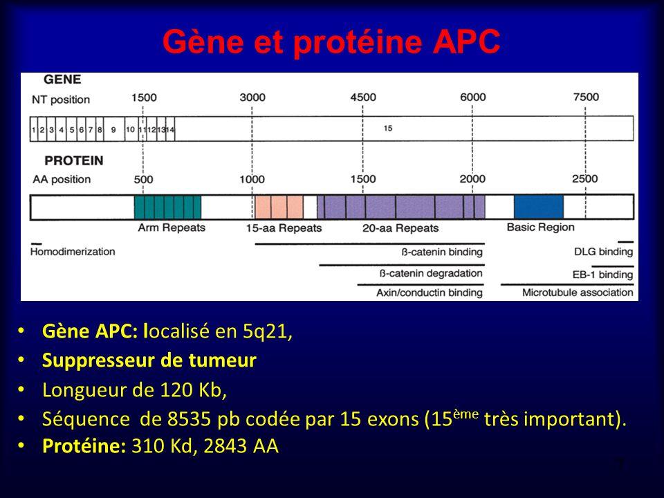 Gène et protéine APC Gène APC: localisé en 5q21, Suppresseur de tumeur