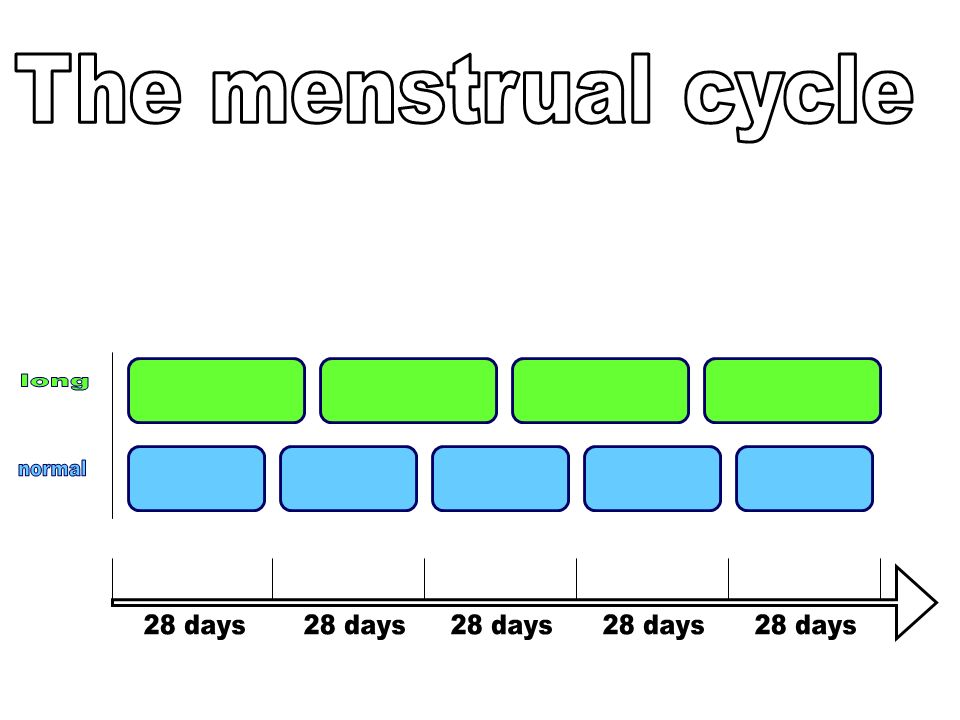 The menstrual cycle long normal 28 days 28 days 28 days 28 days 28 days