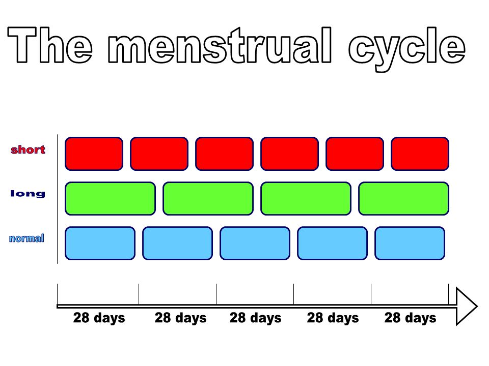 The menstrual cycle short long normal 28 days 28 days 28 days 28 days 28 days