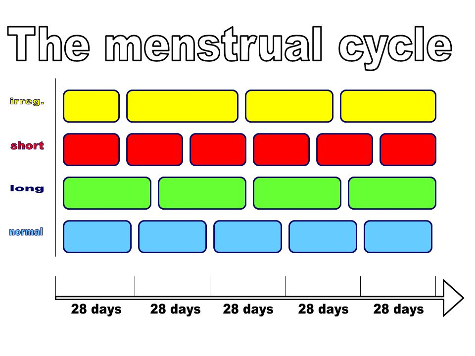 The menstrual cycle irreg. short long normal 28 days 28 days 28 days 28 days 28 days