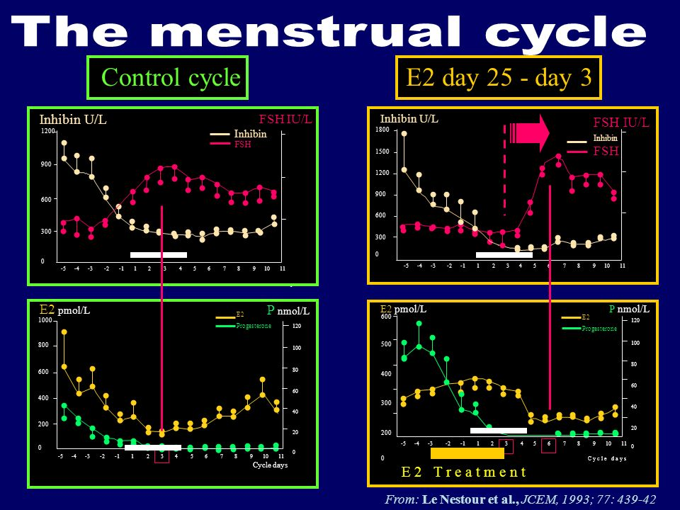 The menstrual cycle Control cycle E2 day 25 - day 3