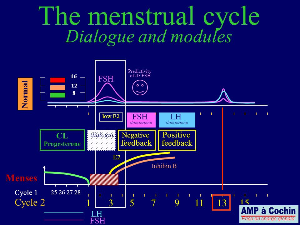 The menstrual cycle Dialogue and modules AMP à Cochin Menses Cycle 2 1