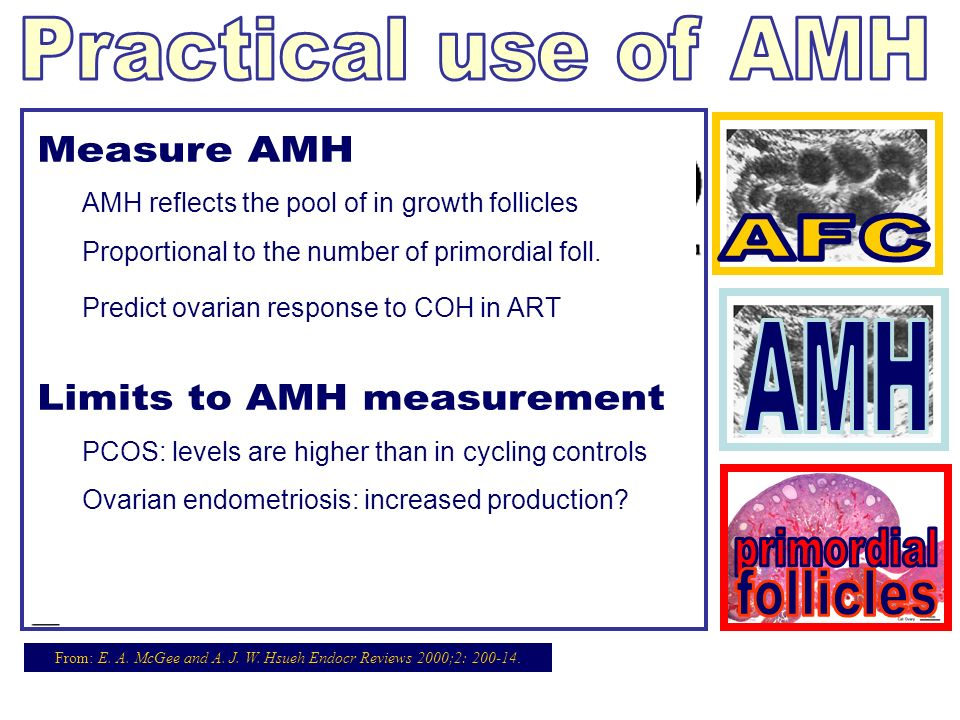 Limits to AMH measurement