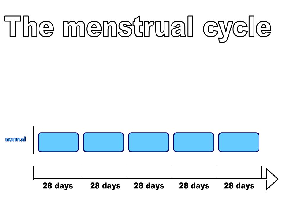 The menstrual cycle normal 28 days 28 days 28 days 28 days 28 days