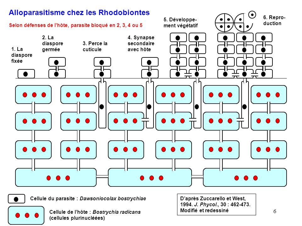 Alloparasitisme chez les Rhodobiontes