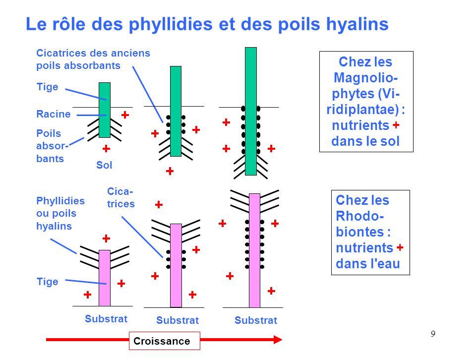 Chez les Magnolio-phytes (Vi-ridiplantae) : nutrients + dans le sol