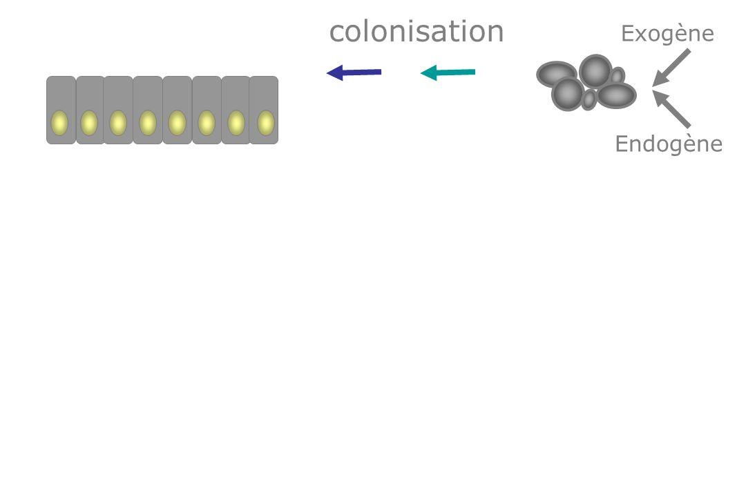 Adhésion colonisation
