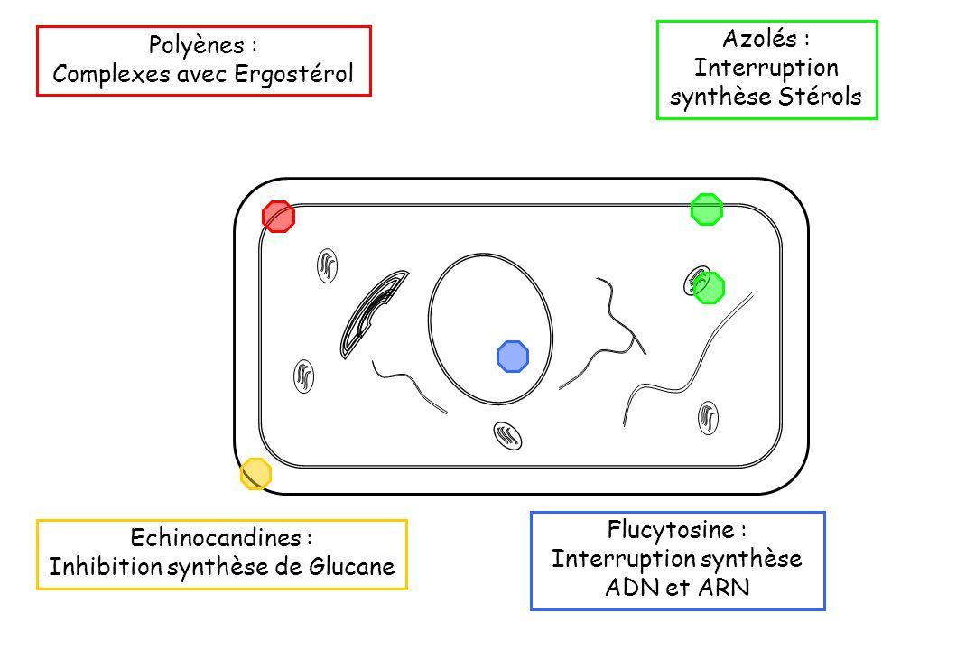 Interruption synthèse Stérols Polyènes : Complexes avec Ergostérol