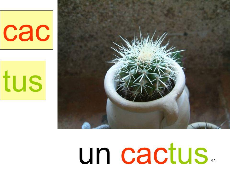 culotte cac tus un cactus instit90