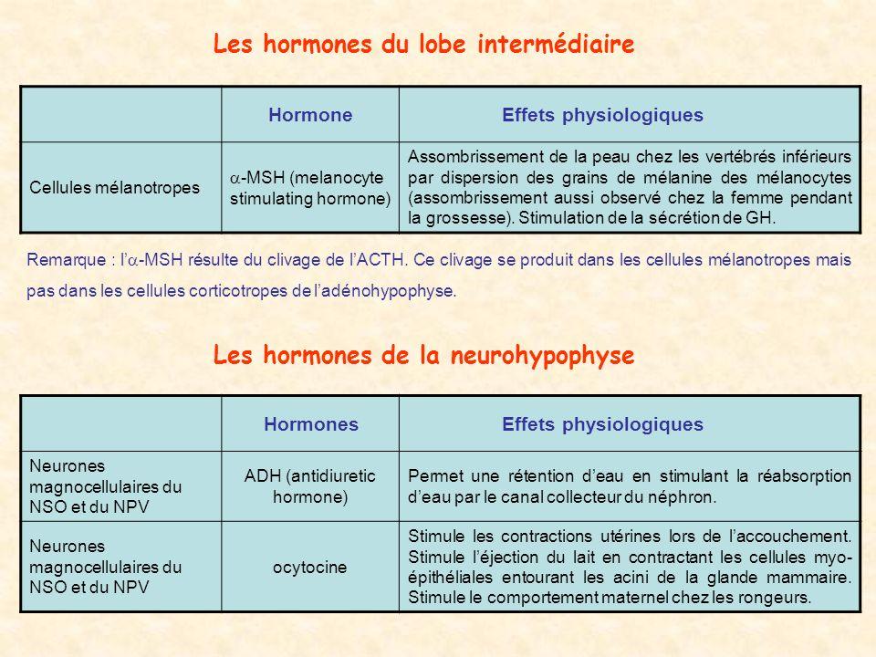 Les hormones du lobe intermédiaire Les hormones de la neurohypophyse