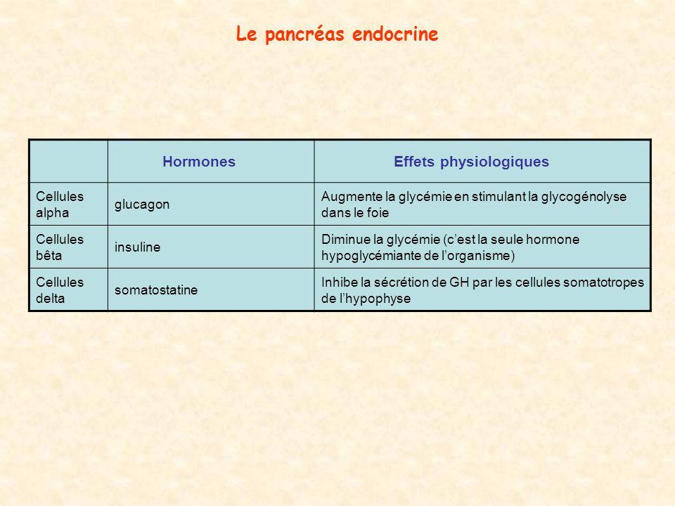 Le pancréas endocrine Hormones Effets physiologiques Cellules alpha