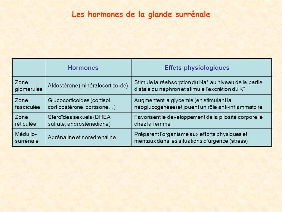 Les hormones de la glande surrénale