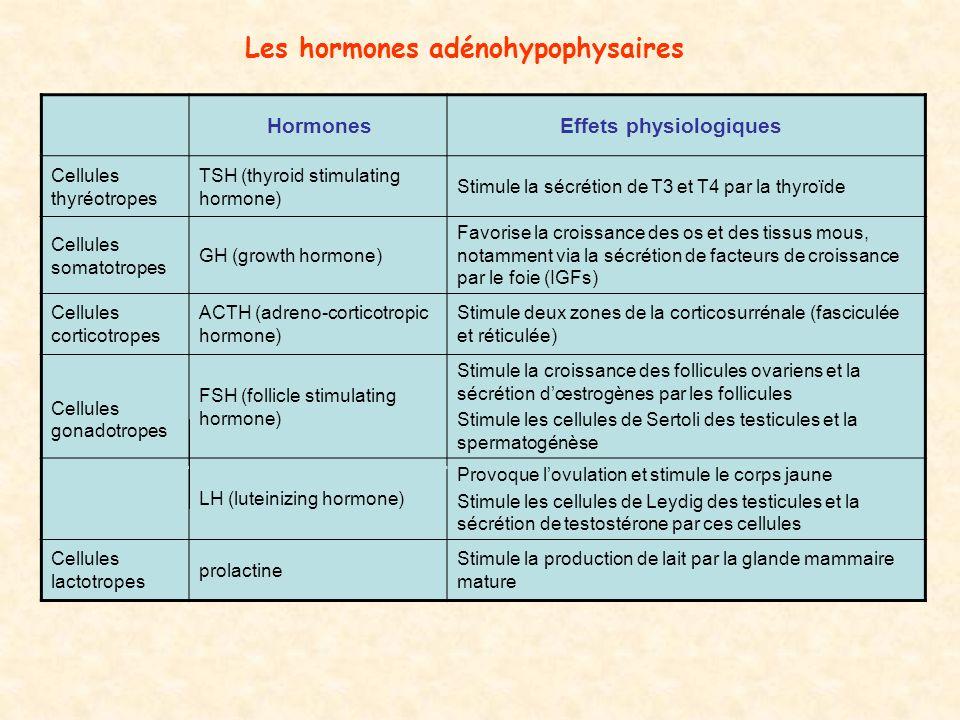 Les hormones adénohypophysaires