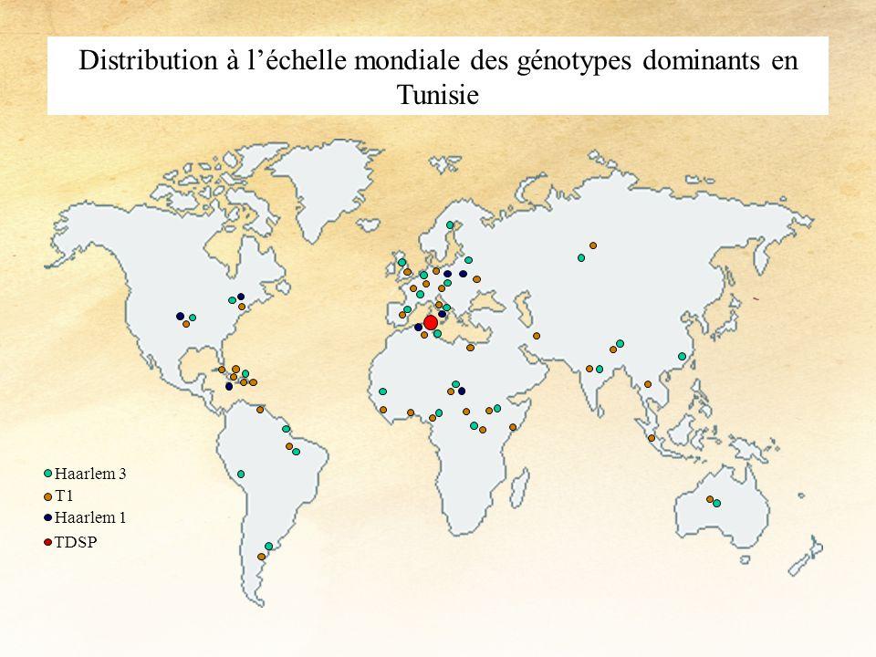 Distribution à l'échelle mondiale des génotypes dominants en Tunisie
