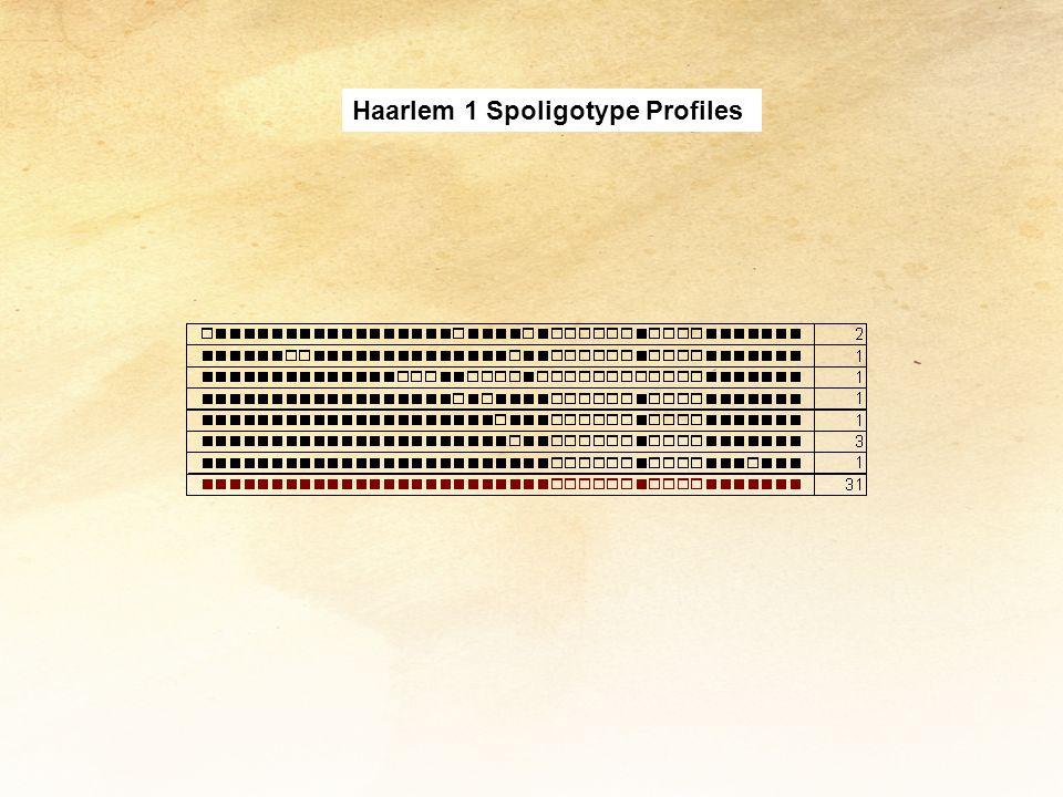 Haarlem 1 Spoligotype Profiles