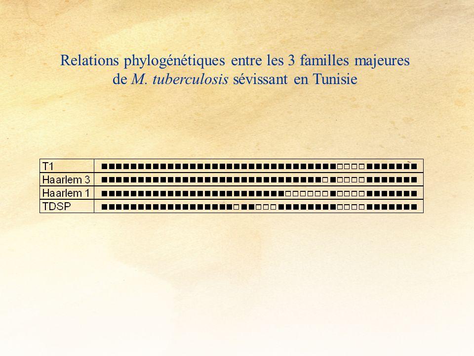 Relations phylogénétiques entre les 3 familles majeures