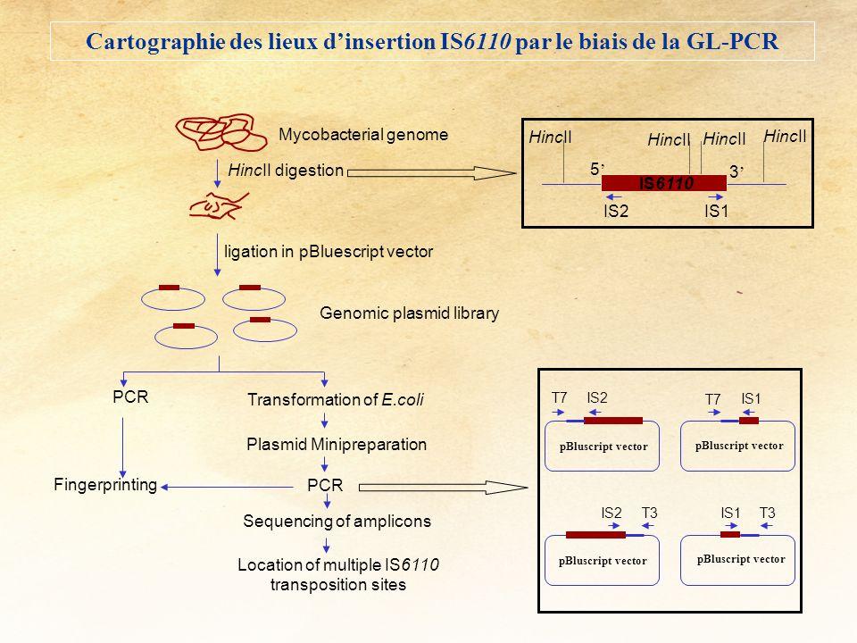 Cartographie des lieux d'insertion IS6110 par le biais de la GL-PCR