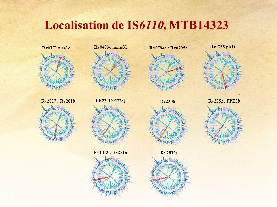 Localisation de IS6110, MTB14323 Rv0171 mce1c Rv0403c mmpS1