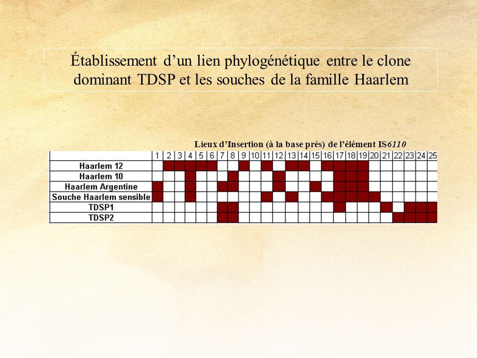Établissement d'un lien phylogénétique entre le clone dominant TDSP et les souches de la famille Haarlem