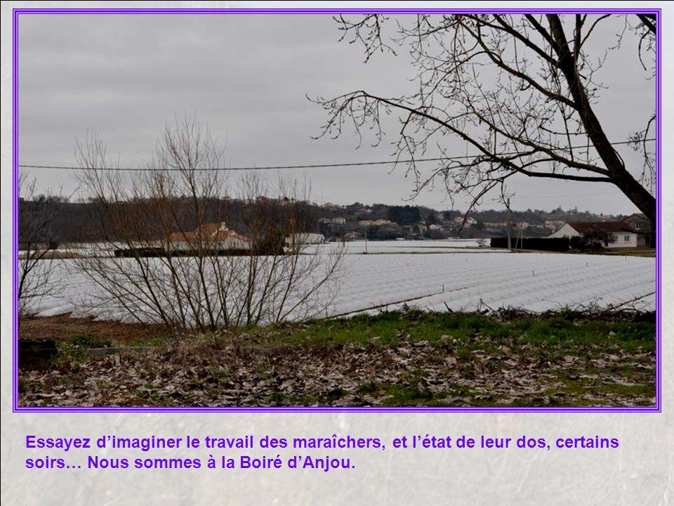 Essayez d'imaginer le travail des maraîchers, et l'état de leur dos, certains soirs… Nous sommes à la Boiré d'Anjou.