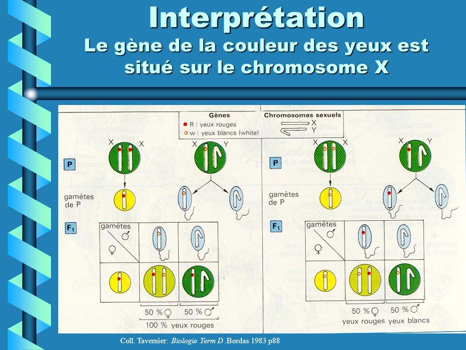 Interprétation Le gène de la couleur des yeux est situé sur le chromosome X