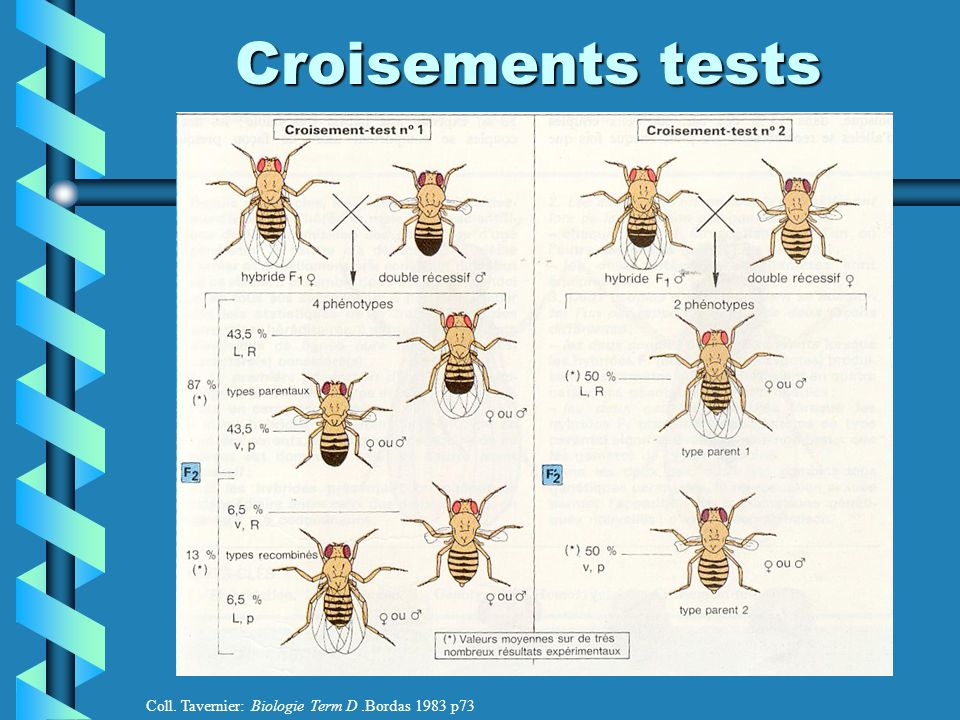 Croisements tests Coll. Tavernier: Biologie Term D .Bordas 1983 p73