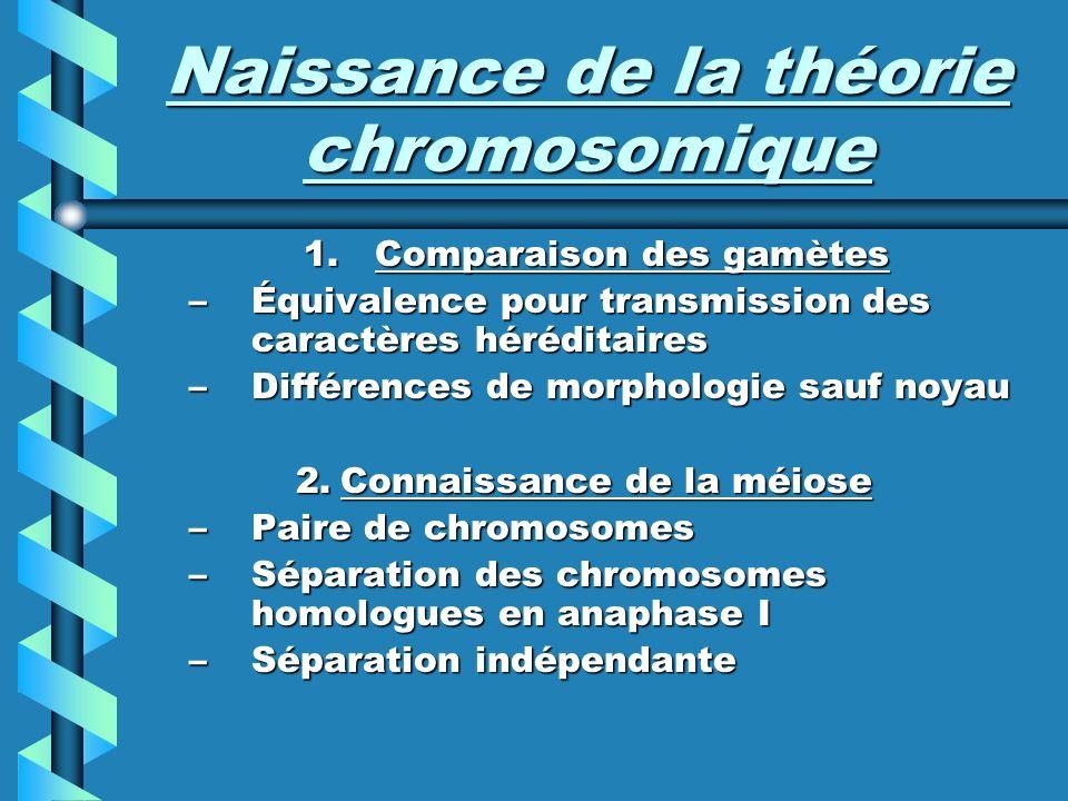 Naissance de la théorie chromosomique