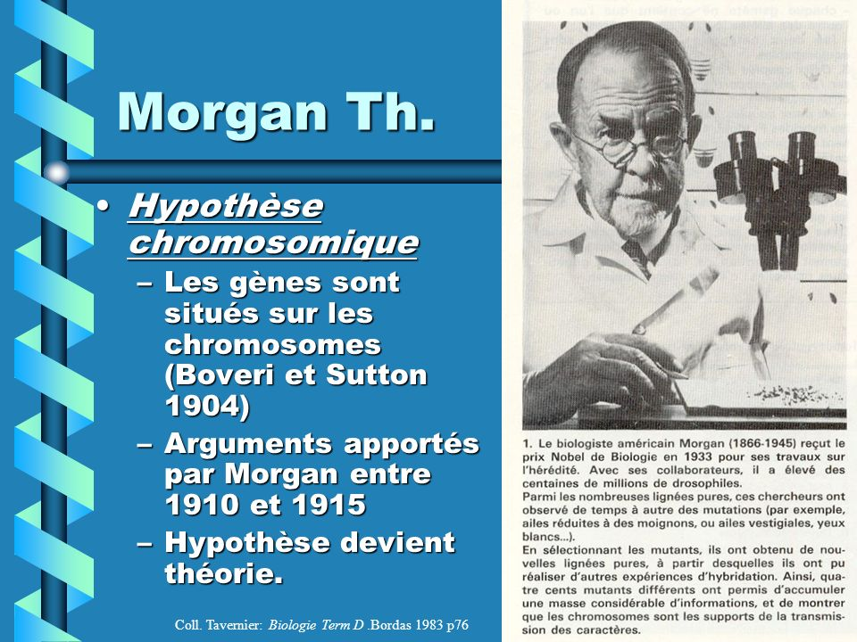 Morgan Th. Hypothèse chromosomique