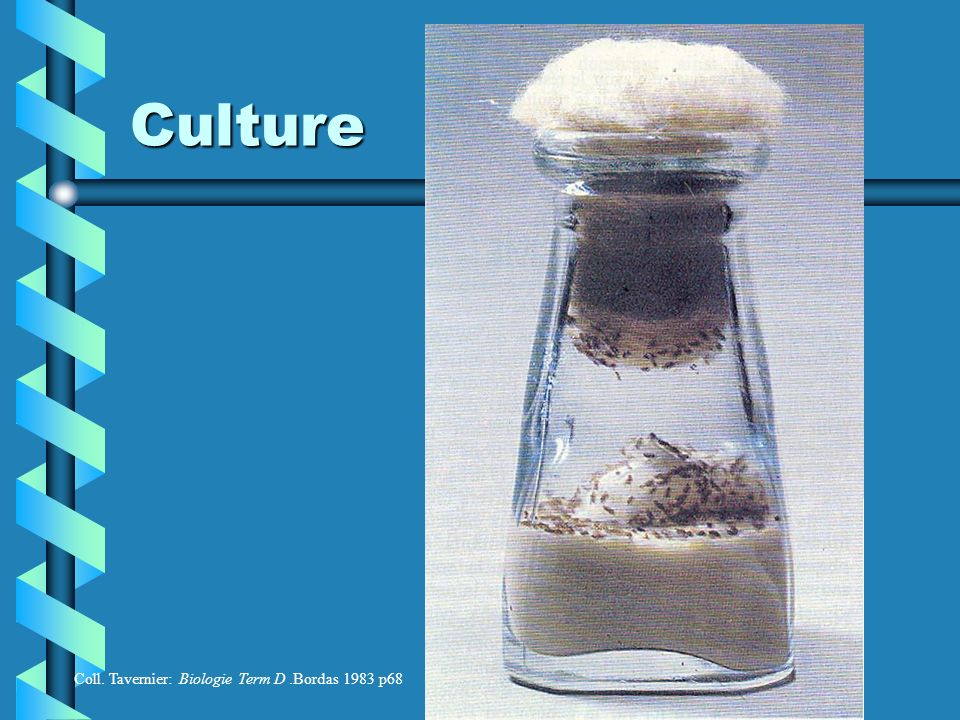 Culture Coll. Tavernier: Biologie Term D .Bordas 1983 p68