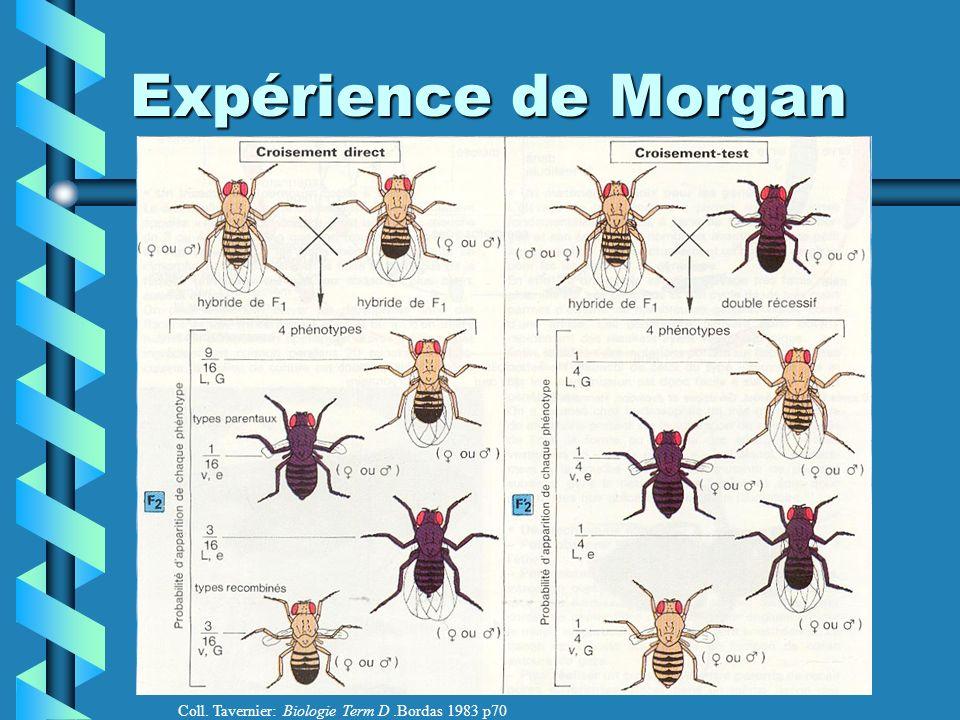 Expérience de Morgan Coll. Tavernier: Biologie Term D .Bordas 1983 p70