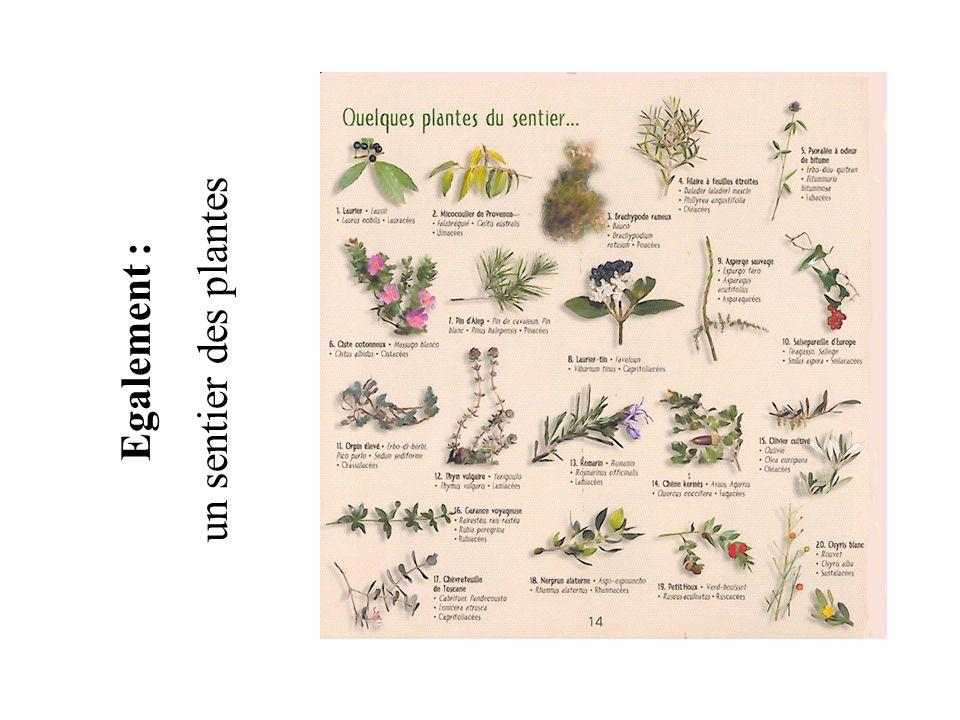 un sentier des plantes Egalement :