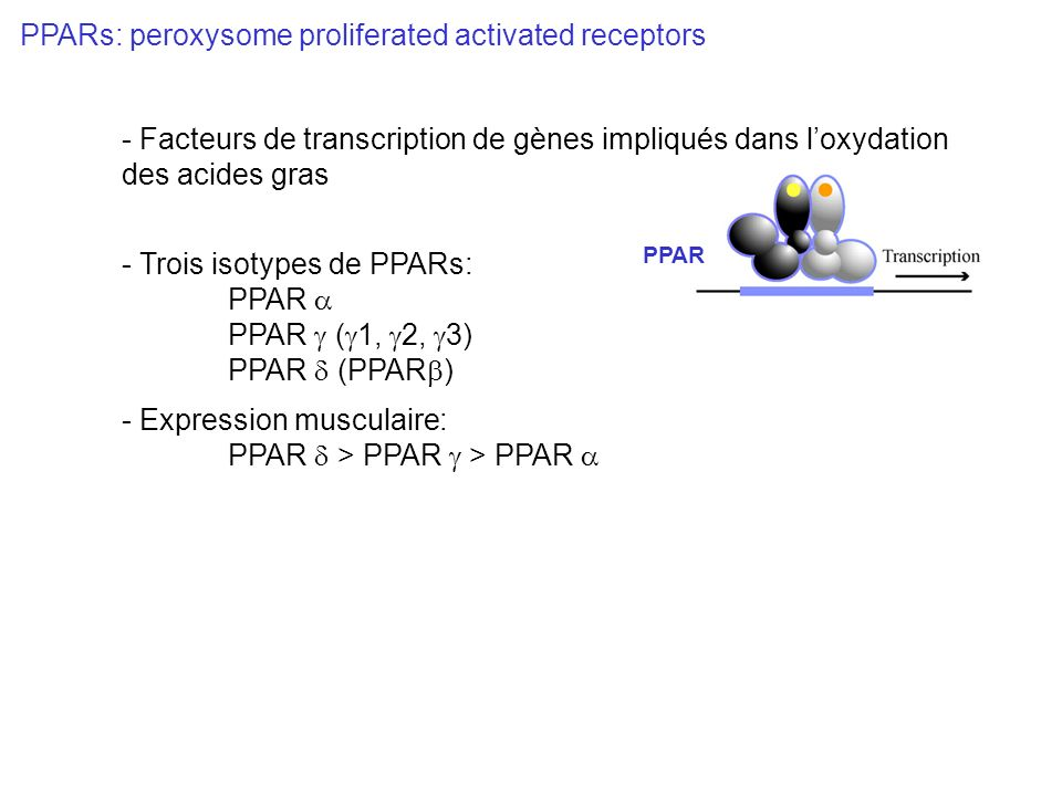 PPARs: peroxysome proliferated activated receptors