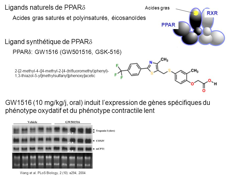 Ligands naturels de PPAR