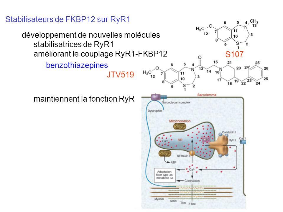 Stabilisateurs de FKBP12 sur RyR1