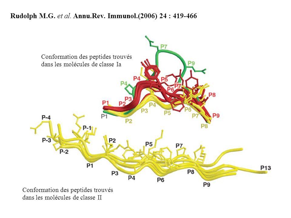 Rudolph M.G. et al. Annu.Rev. Immunol.(2006) 24 : 419-466